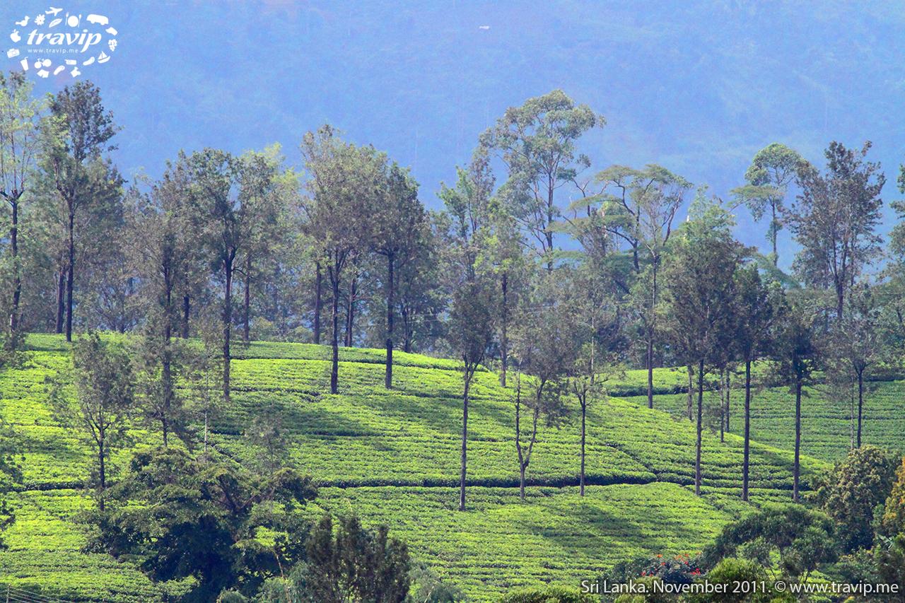 srilanka21